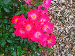 Flower pink.
