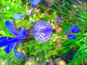 Flower purple green.