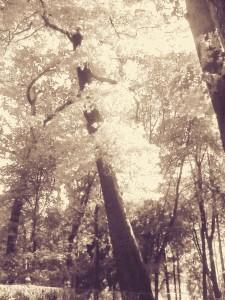 Tree vintage.