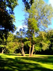 Tree green beauty.