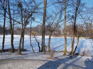 Park ice view.