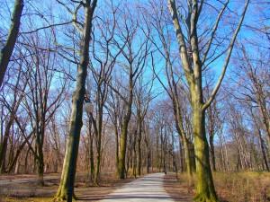 Path park.